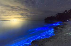 blue fluorescent-beach